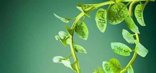 Компания Plant-e предлагает генерировать электроэнергию при помощи растений
