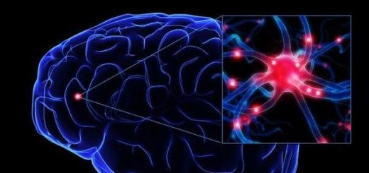 Антибиотик увеличивает нейропластичность мозга